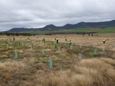Volunteer tree planters regenerating damaged lands