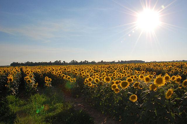 Flowers and sunshine